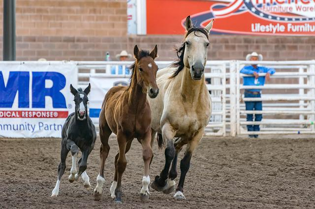 Animals, Cowboy, Equine, Foal, Horses, Race, Soil