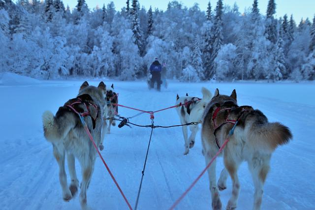 Sled, Race, Snow, Dogs, Winter, Harness, Transport