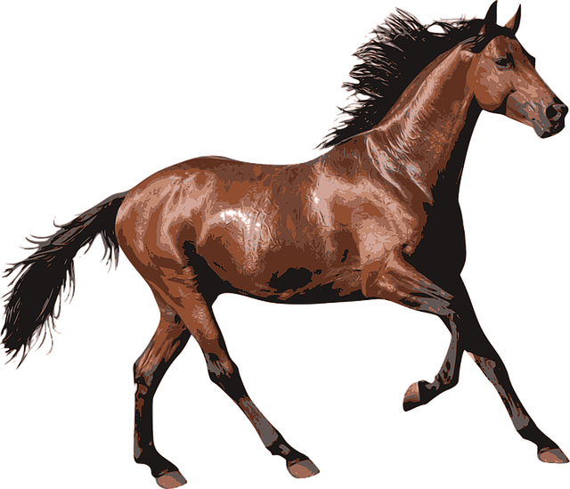 Horse, Race Horse, Animal, Equine, Equestrian, Riding
