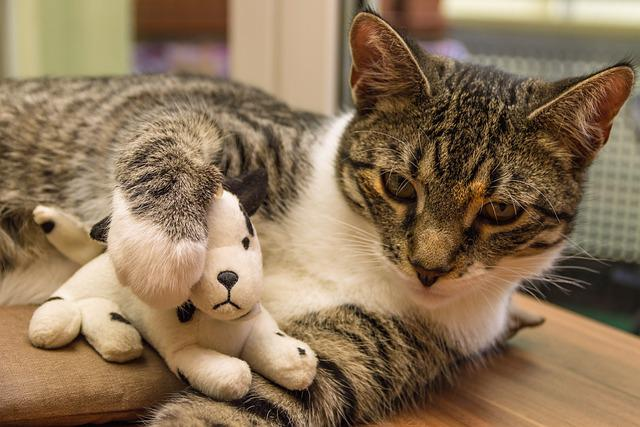 Cat, Toys, Plush Dog, European Shorthair, Race