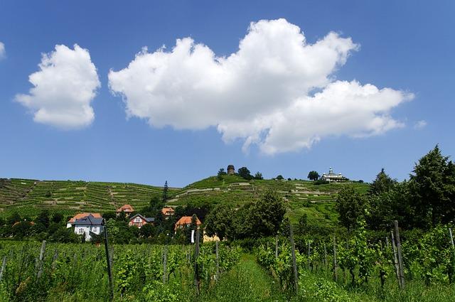 Village, Radebeul, Saxony, Vineyards, Elbe Valley