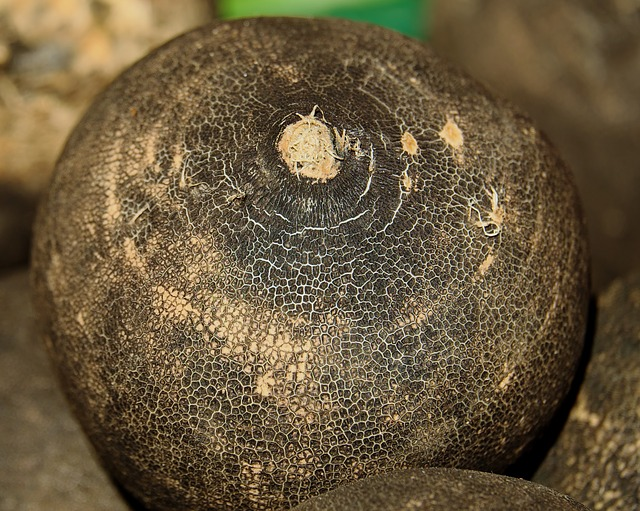 Black Winter Radish, Radish, Black, Shell, Aroma, Sharp