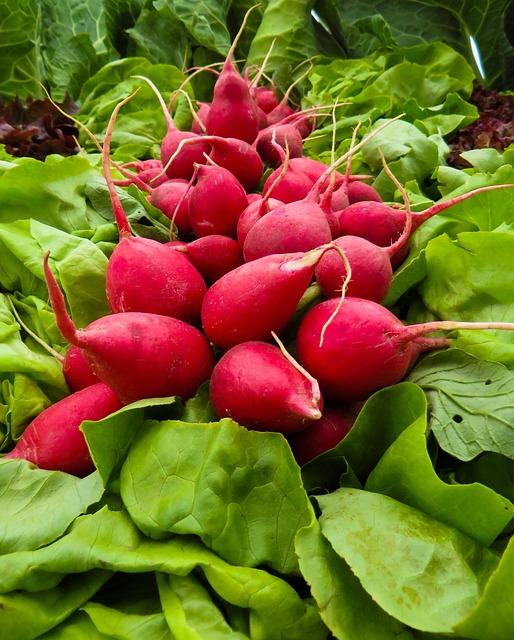 Vegetables, Radishes, Radish, Food, Garden, Eat