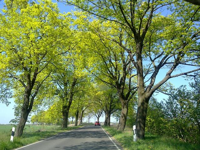 Germany, Dahme-spreewald, Ragow, L45, Country Road