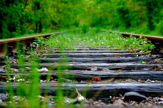 Nature, Plant, Grass, Leaf, Wood, Railway Line, Railway