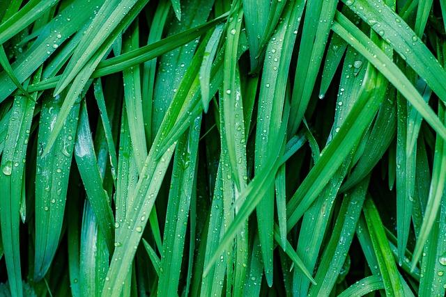 Grass, Green, Rain, Drip, Fresh, Nature, Meadow