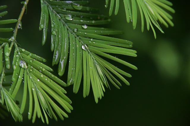 Rain, Plant, Green, Eye