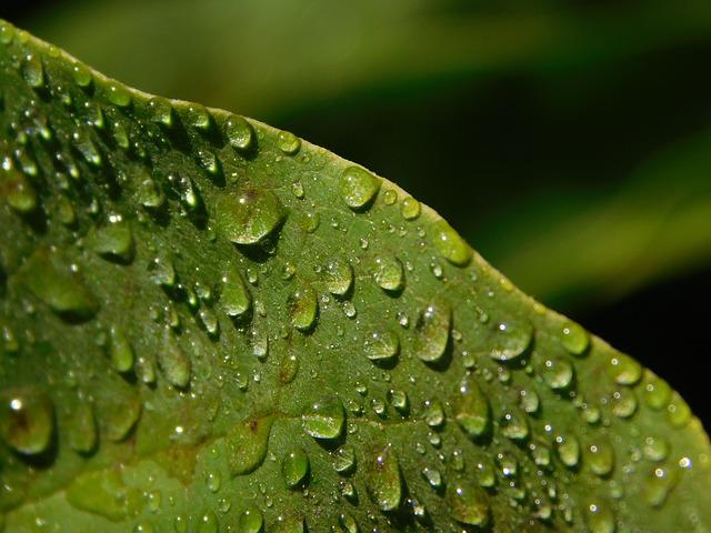 Leaf, Drop Of Water, Raindrop, Drip, Rain, Dew, Dewdrop