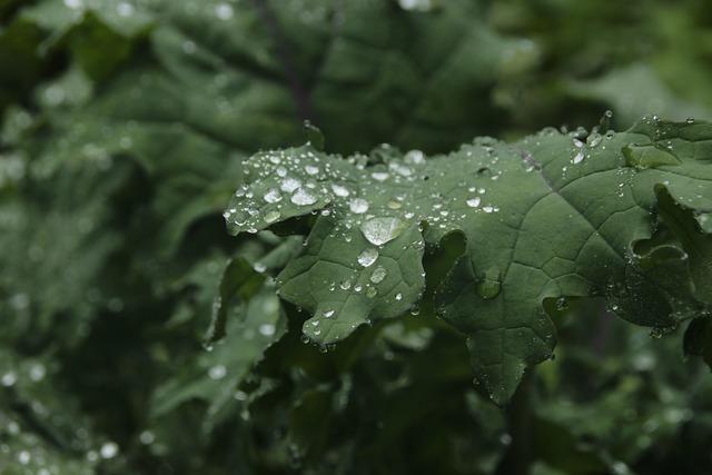 Leaf, Drop, Flora, Nature, Rain, Kale, Plant, Natural