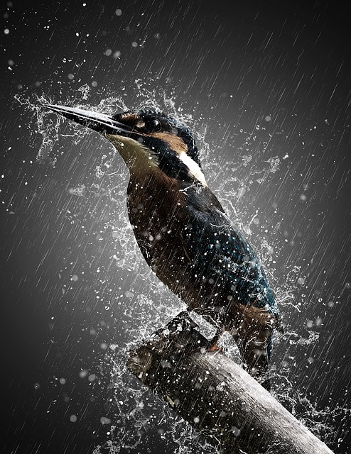 Bird, Rain, Storm, Effect, Manipulation, Nature