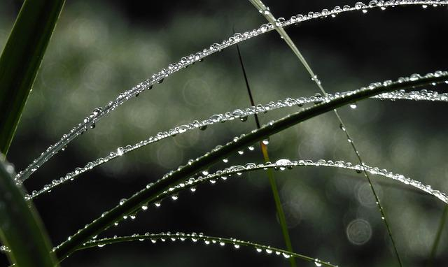 Photography, Nature, Grass, Beaded, Rain, Photograph