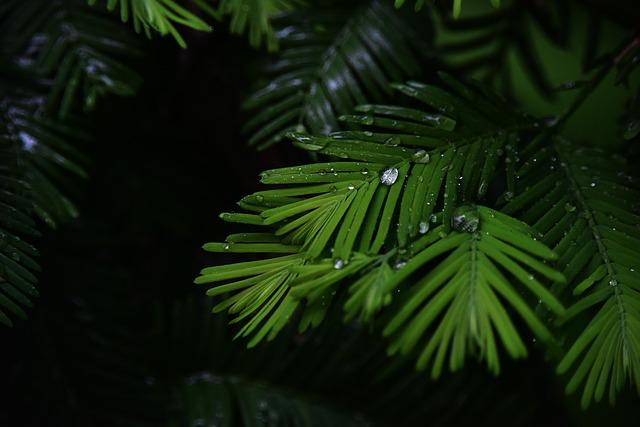 Water Droplets, Rain, It's Raining, Plant, Eye, Green