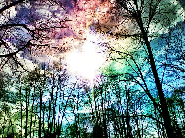 Rainbow, Sky, Trees, Log, Kahl, Winter