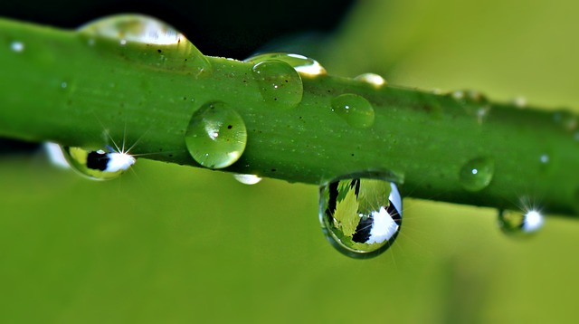 Drip, Raindrop, Drop Of Water, Grapevine, Wine Leaf
