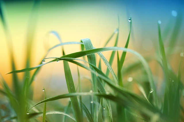 Grass, Plant, Meadow, Rush, Drip, Raindrop, Dewdrop