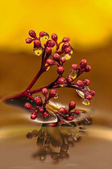 Drop Of Water, Drip, Water, Wet, Liquid, Raindrop