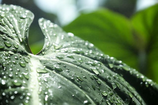 Focus, Green, Jungle, Leaves, Raindrop, Raindrops