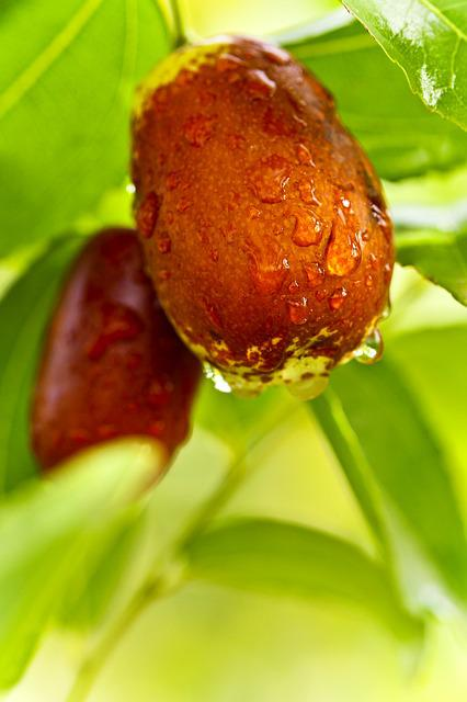 Jujube, Food, Date, Date Tree, Fruit, Health, Raindrops