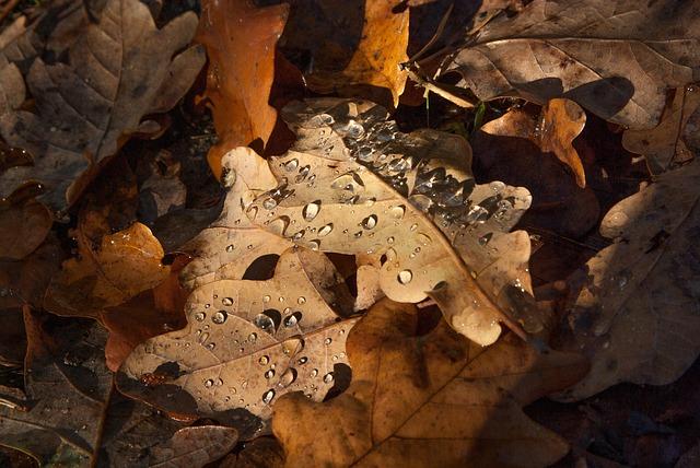 Leaves, Fall, Raindrops