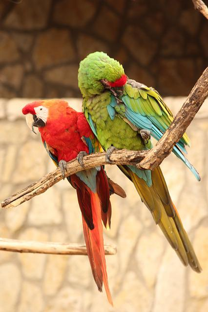 Parrot, Color, Bird, Rainforest, Feather, Wing