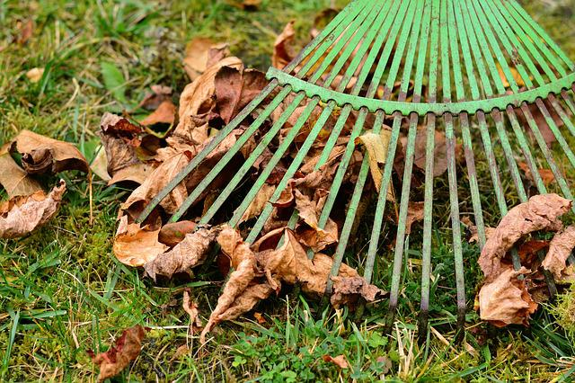 Leaves, Rake Leaves, Computing, Autumn, Fall Foliage