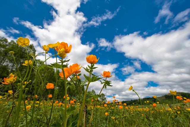 Spring, Flowers, Meadow, Ranunculaceae, June