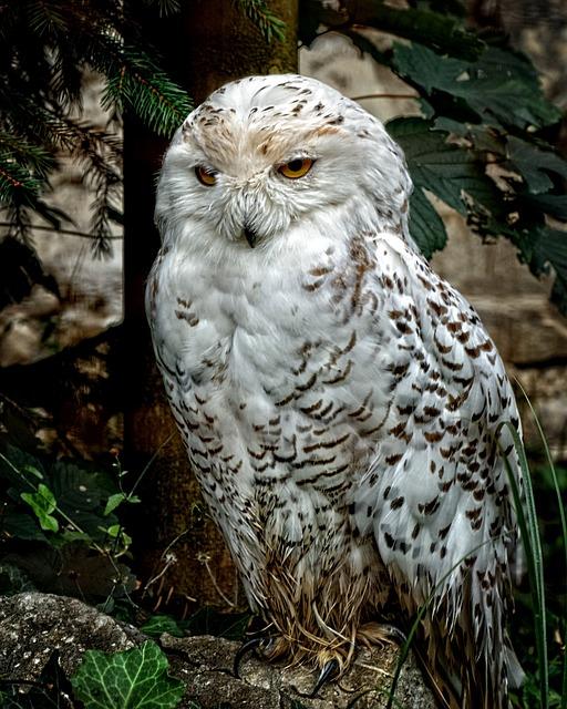 Snowy Owl, Owl, Bird, Animal, Plumage, Feather, Raptor