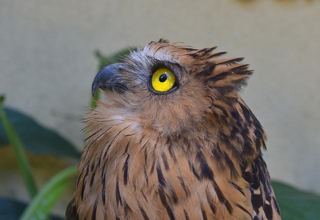 Owl, Bird, Zoo, Raptor, Nature, Beak, Animal, Looking