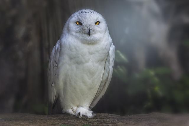 Raptor, Owl, Bird, Animal World, Plumage