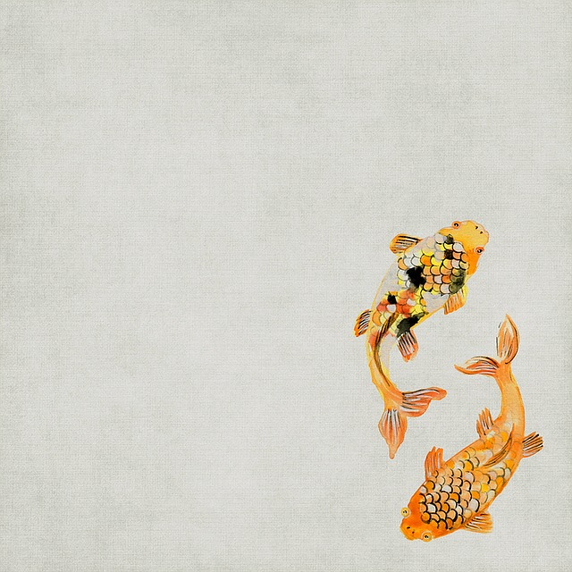 Background, Koi, Fish, Scrapbook, Orange, Rare