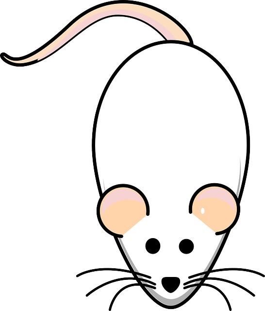 Rat, Mouse, White, Albino, Animal, Mammal, Lab, Biology