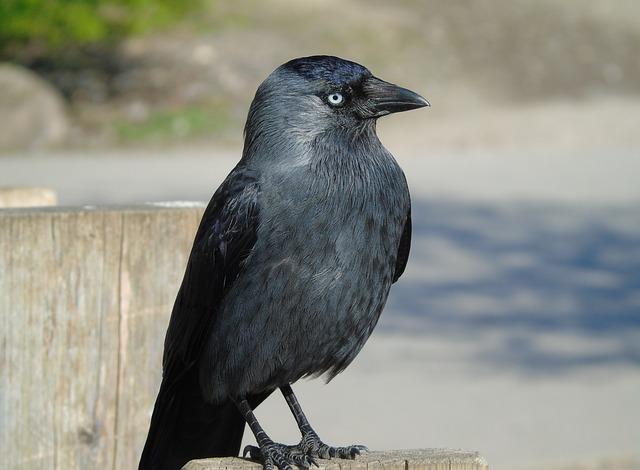 Bird, Wildlife, Nature, Animal, Outdoors, Crow, Raven