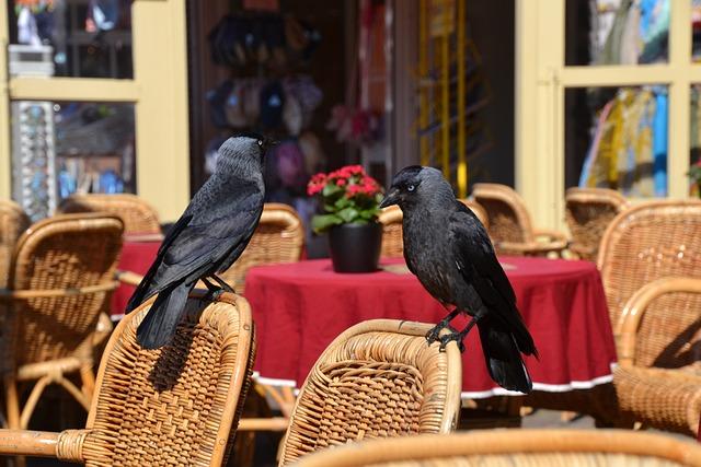 Raven, Bird, Animal, Black, Fly