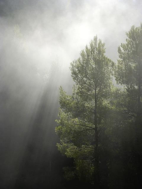 Forest, Fog, Ray Of Sunshine, Backlight, Trees, Serene