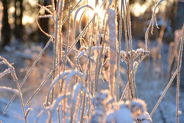 The Sun Through The Branches, Rays, Sun, Dawn, Sunrise