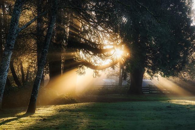 Sunrise, Daybreak, Sunlight, Rays, Meadow, Landscape
