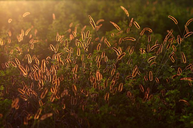 Spice, Rays Of The Sun, Shine, Camp, Plant, Beauty