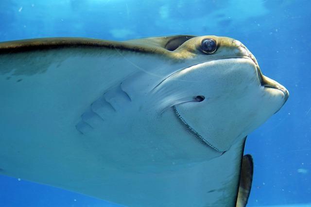 Stingray, Rays, Underwater, Underwater World, Aquarium