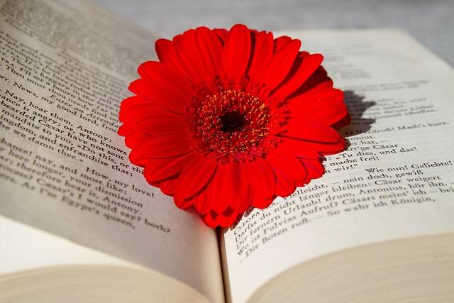 Book, Open Book, Read, Flower, Gerbera, Red, School