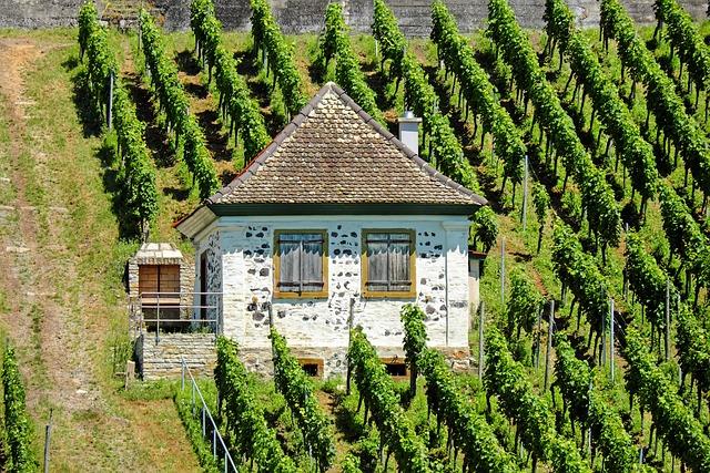 Landscape, Rebhaus, Vineyard, Summer, Kaiserstuhl, Swim