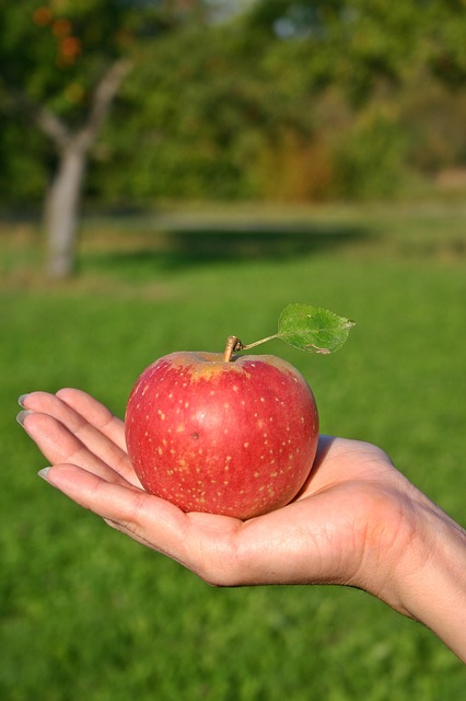 Apple, Fruit, Ripe, Vitamins, Red Apple, Delicious, Red