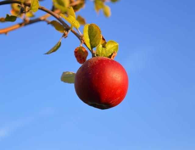 Apple, Red, Red Apple, Fruit, Ripe, Branch, Vitamins