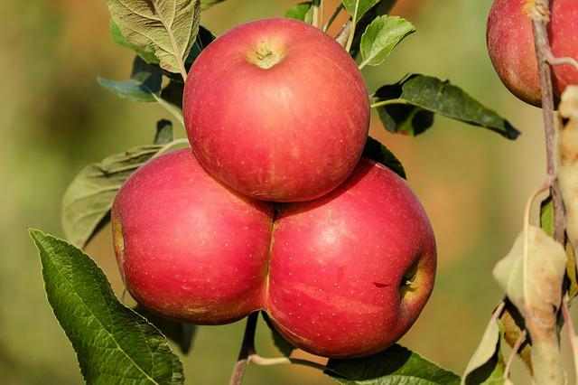 Apple, Fruit, Fruits, Red, Tree, Autumn, Vitamins