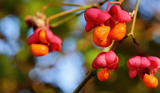 Berries, Red, Orange, Tree, Nature, Branch