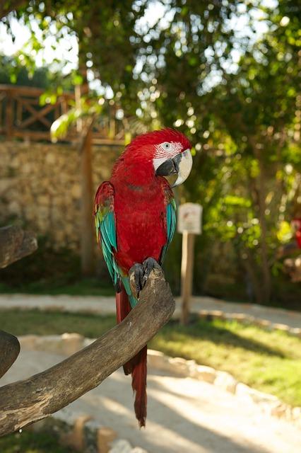 Parrot, Bird, Red