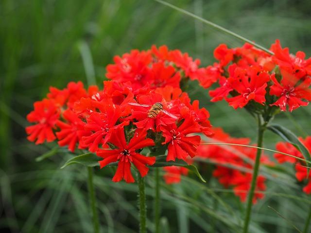 Burning Love, Flower, Blossom, Bloom, Red