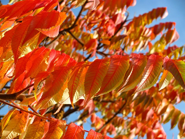 Orange, Red, Leaves, Leafy, Trees, Branches, Autumn
