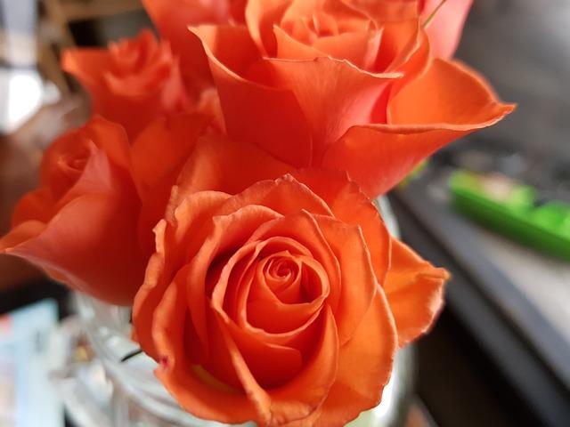 Flowers, Rose, Orange, Desktop, Red, Rose Garden, Buds
