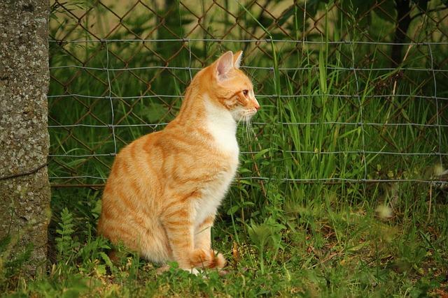 Cat, Mieze, Kitten, Domestic Cat, Red Cat
