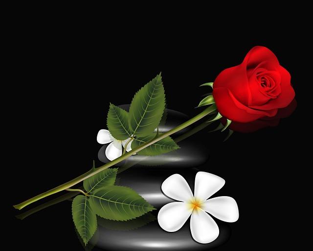 Flower, Plant, Nature, Leaf, Floral, Tulip, Red Flower
